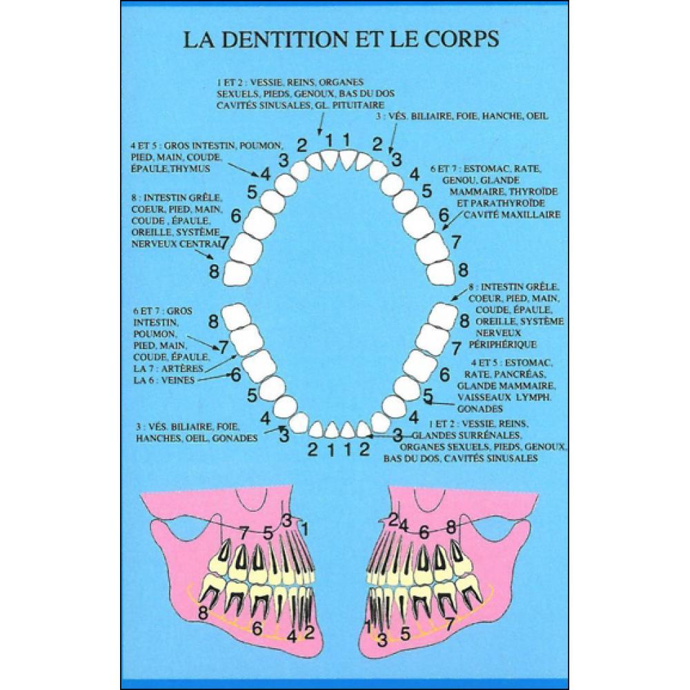 Planche-plastifiee-Dentition-et-le-corps-mini